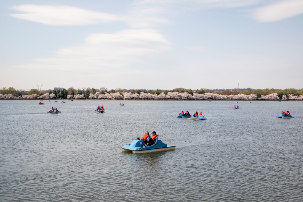 Paddle boats on the Potomac River during cherry blossoms
