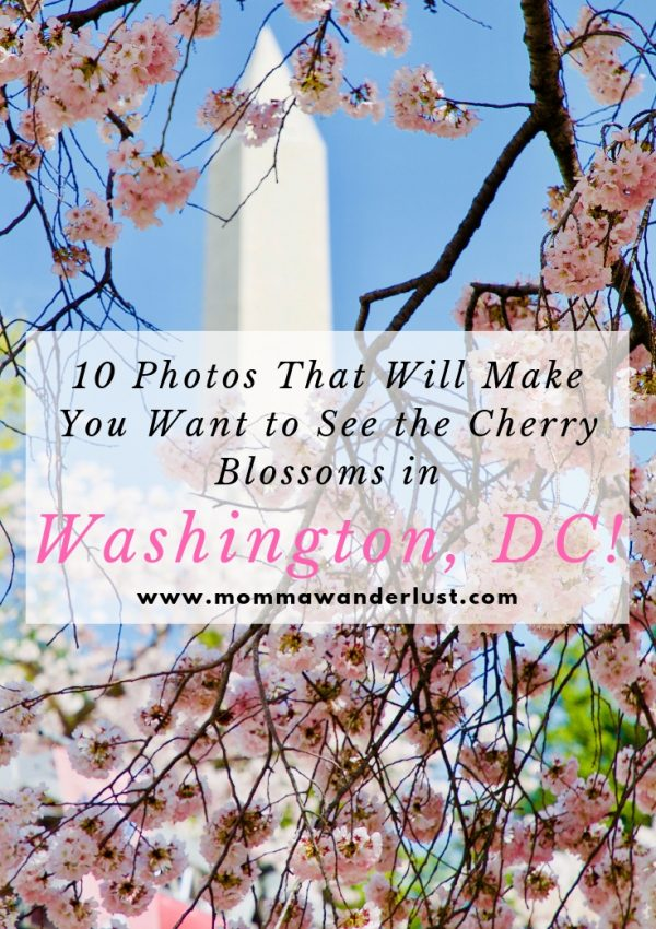 10 Photos That Will Make You Want to See the Cherry Blossoms in Washington, DC!