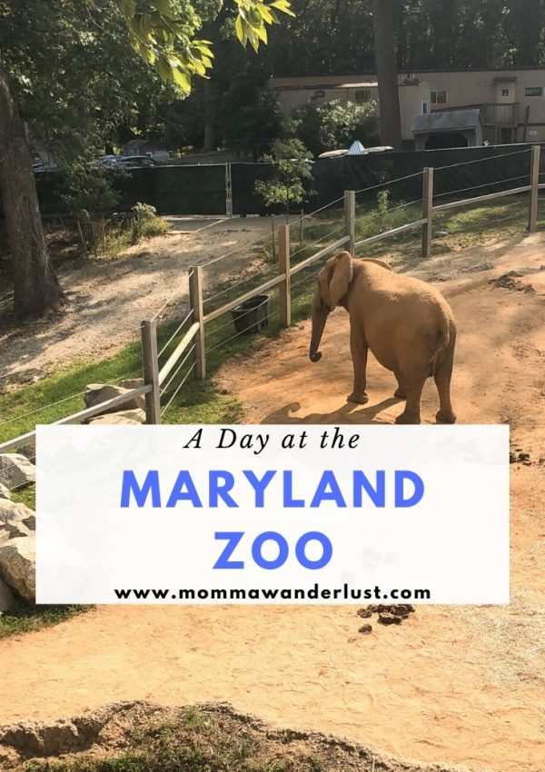 A Day at the Maryland Zoo in Baltimore