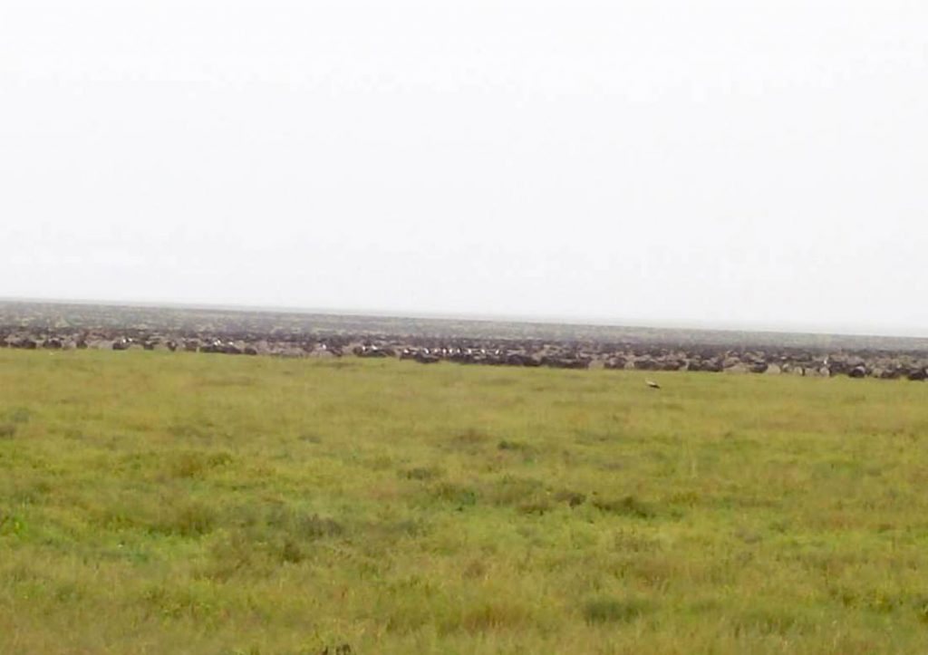 Travel Bucket List - The Great migration of wildebeests in the Serengeti