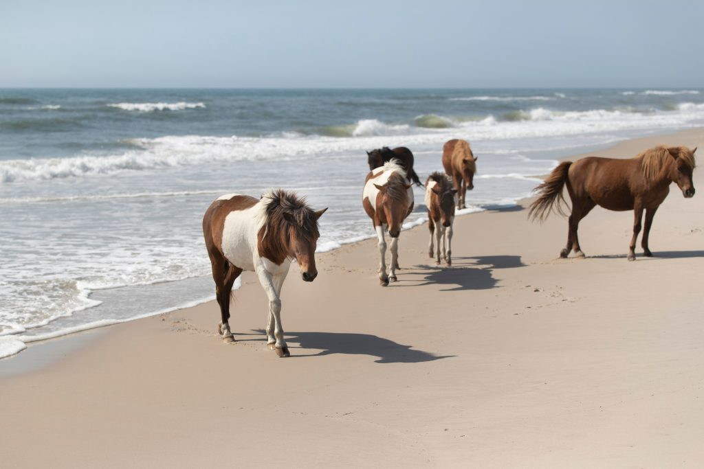 Summer Travel 2021: best family vacation destinations featured by top US BIPOC travel blogger, Momma Wanderlust - Assateague