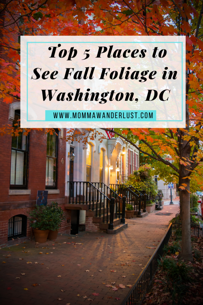 Top 5 Places to See Fall Foliage in Washington, DC featured by top US family travel blogger, Momma Wanderlust