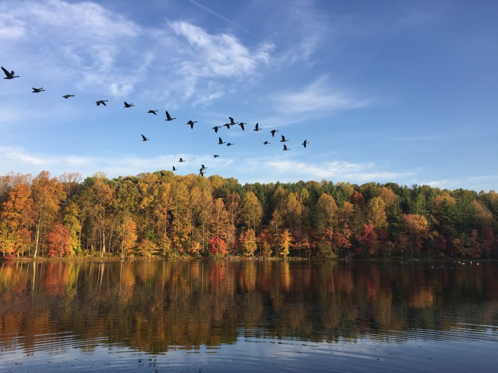 5 Best Places to See Fall Foliage in Washington, DC featured by top US family travel blogger, Momma Wanderlust
