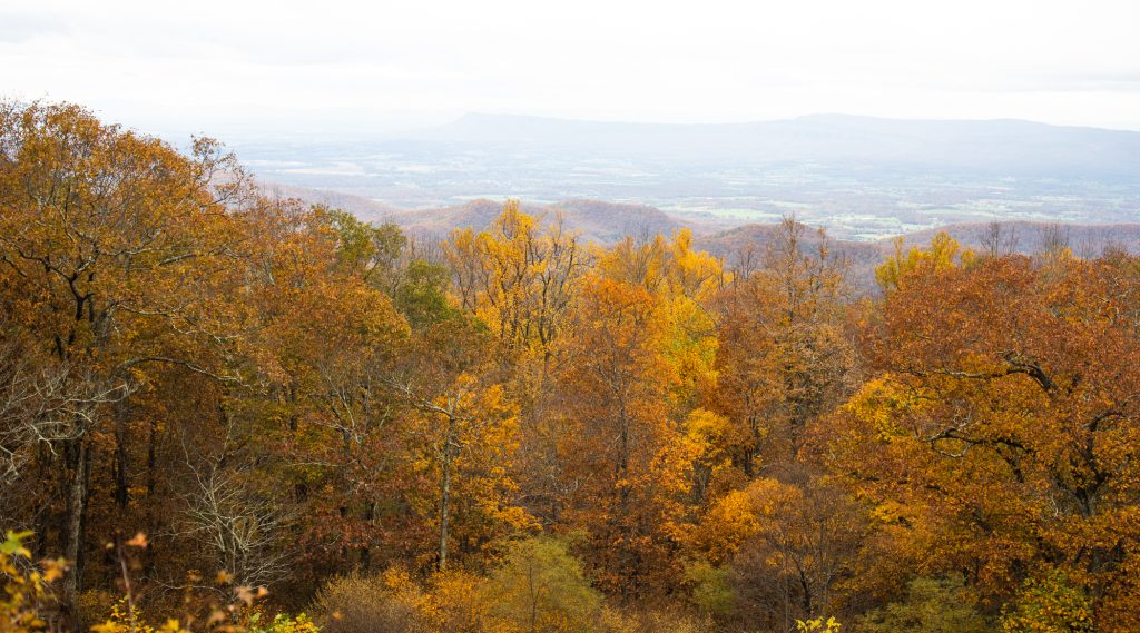 7 Best Places to See Fall Foliage in the Shenandoah Valley featured by top US family travel blogger, Momma Wanderlust